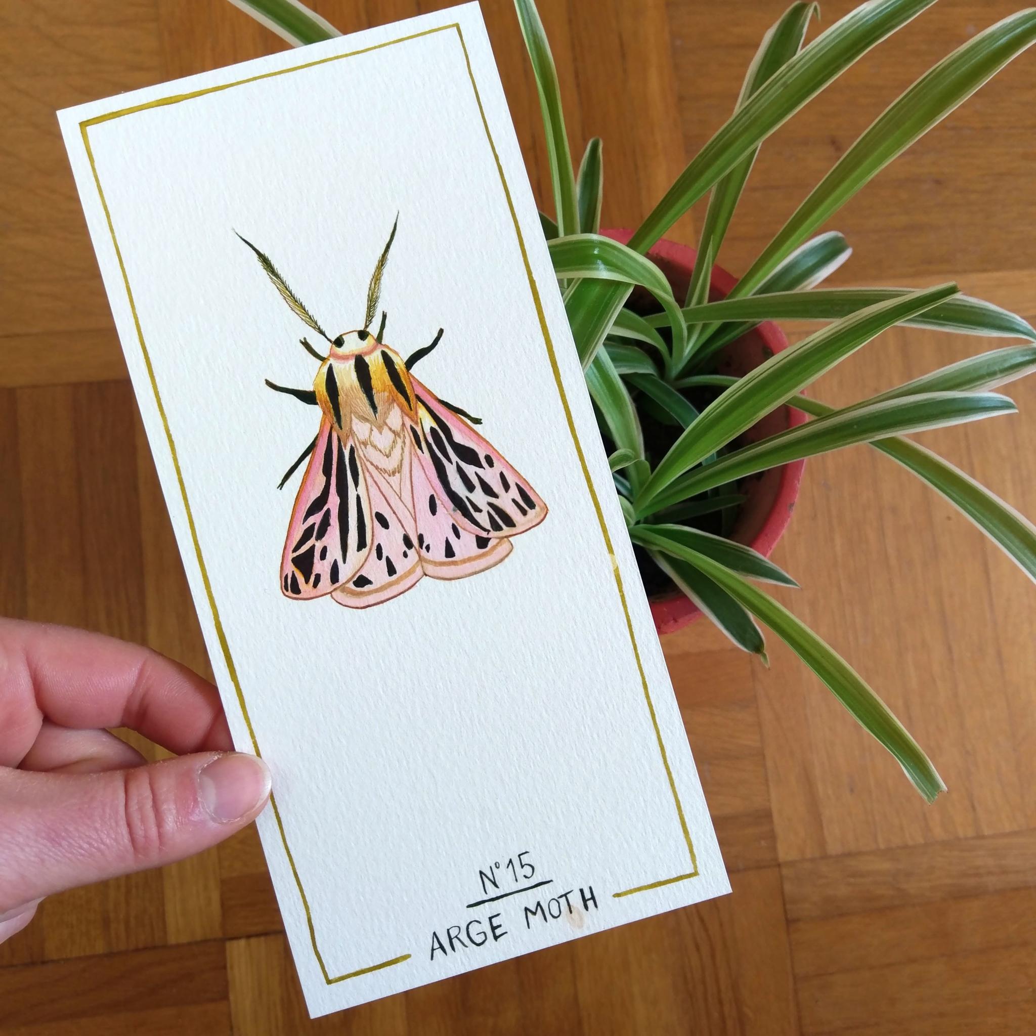 Arge moth // Dessin original