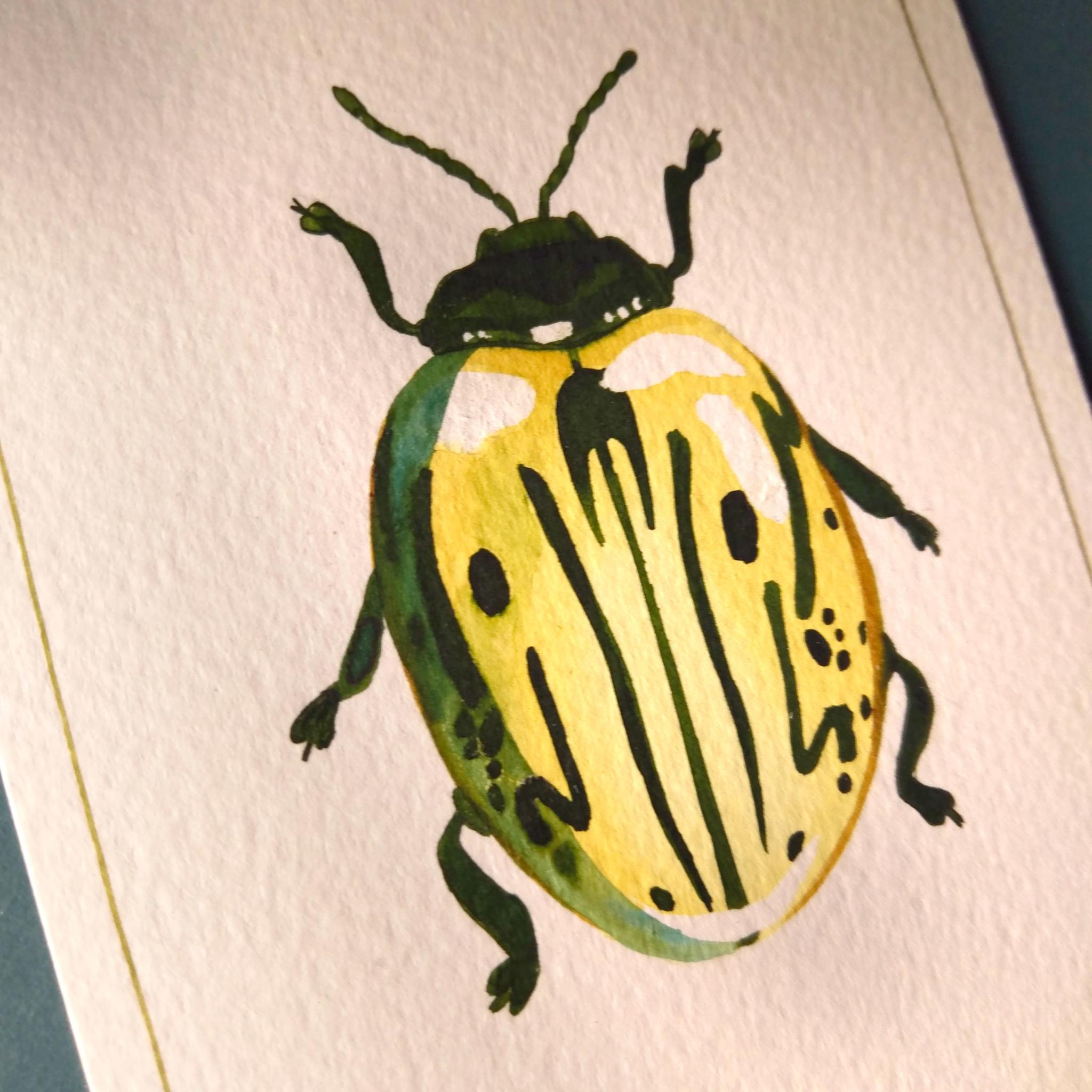 Série insectes - Calligrapha - Oeuvre unique - dessin à l'encre en vente