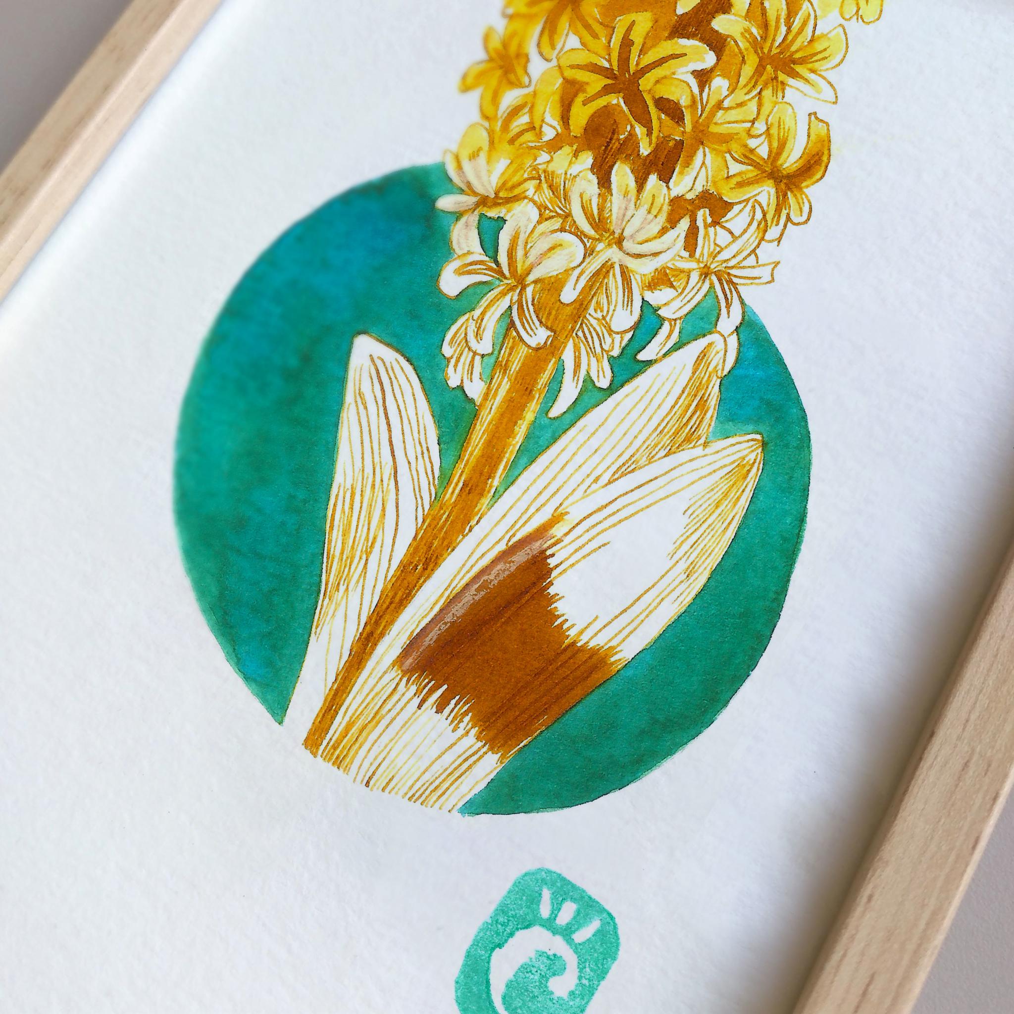 Dessin original à l'encre colorée - oeuvre unique - Jacinthe - série Fleurs hivernales