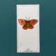 dryandra moth - dessin original à l'encre en vente